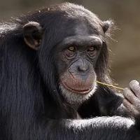 Monkey Trader Pro