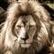 Lion Trader Pro