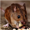 Mouse Scalper Pro