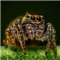 Spider Crazy Pro