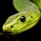 Snake Crazy Pro