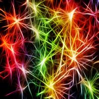 Synapse superb