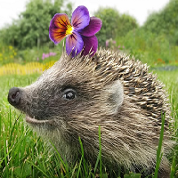 Euro Daily Hedgehog