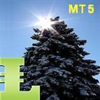 Pine Trees MT5