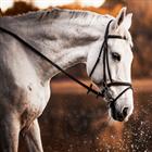 Willing horse EURUSD