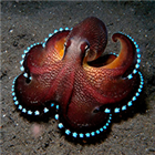 Clever octopus