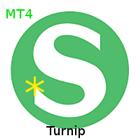 Shmendridge PAM Turnip for MT4