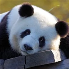 Panda Trader Pro