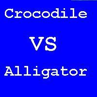 VACrocodile