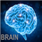 Brain Mt4
