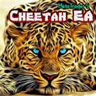 Cheetah EA MT5