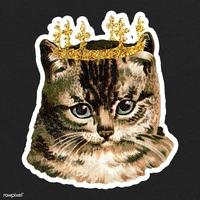 KingofCAT