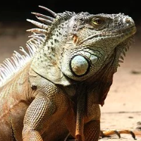 Lizard Scalper Pro