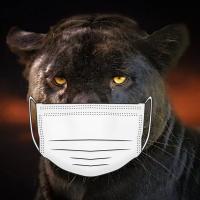 Panther Trader Pro