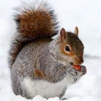 Squirrel Trader Pro