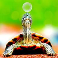 Turtle Scalper Pro