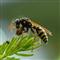 Wasp Crazy Pro