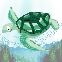 Way of Turtle