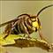 Kick the hornet