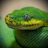 Anaconda Pro