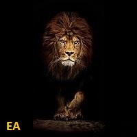 Price Action EA MT5