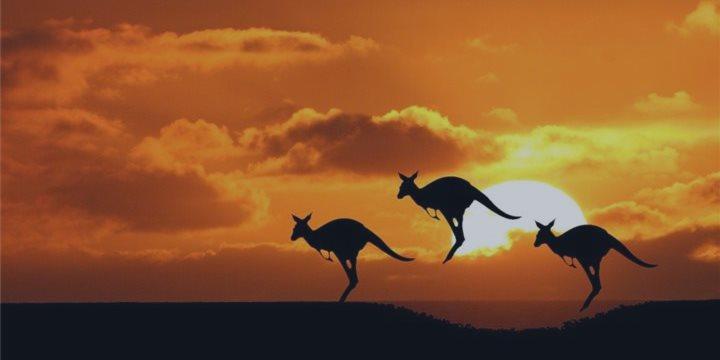 澳大利亚袋鼠肉产业遇困境 寄望中国市场