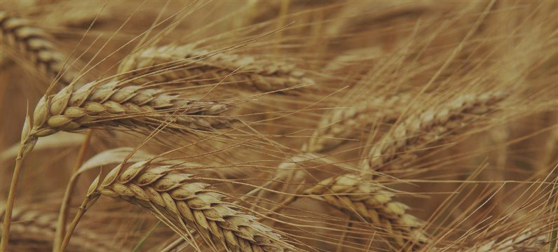 Mercado de granos alcista