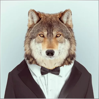 trader.wolfy