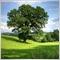 greentreen