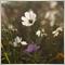 wildflower29