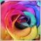 RainbowRose 99