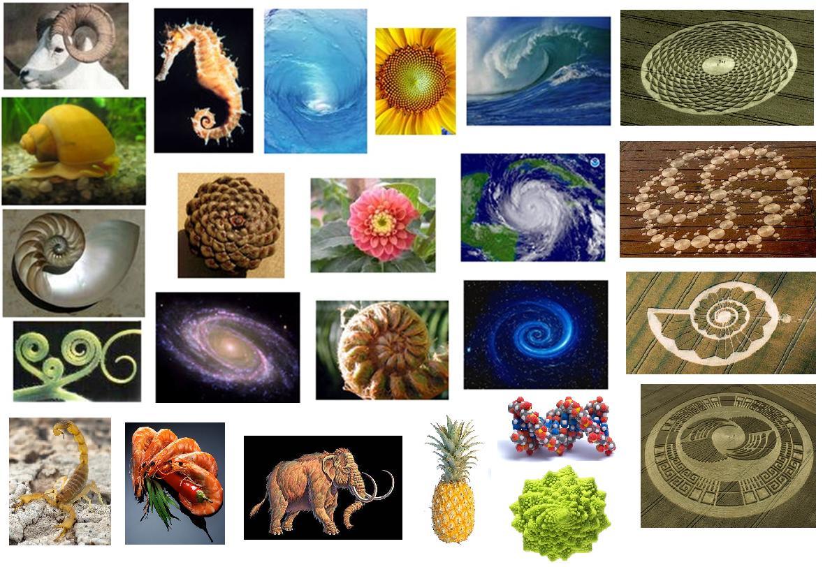 Золотое сечение картинки в природе